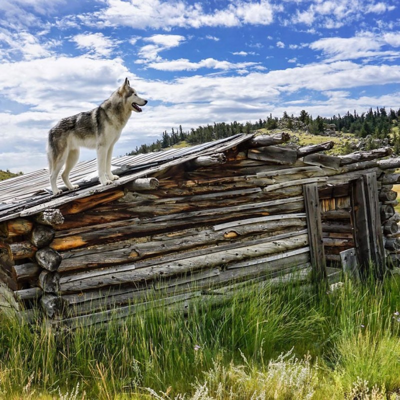 fun-Wolfdog-wild-life-adventures-nature-photography (14)