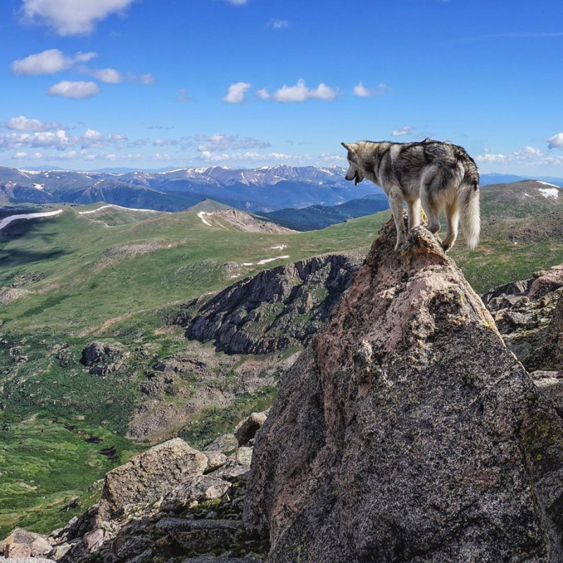 fun-Wolfdog-wild-life-adventures-nature-photography (16)