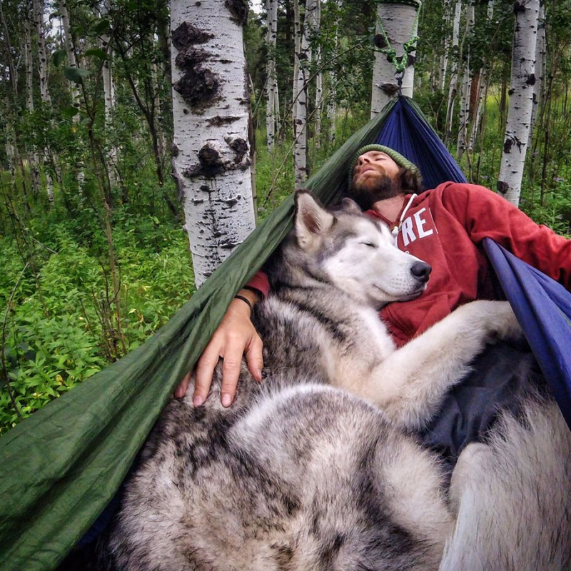 fun-Wolfdog-wild-life-adventures-nature-photography (18)
