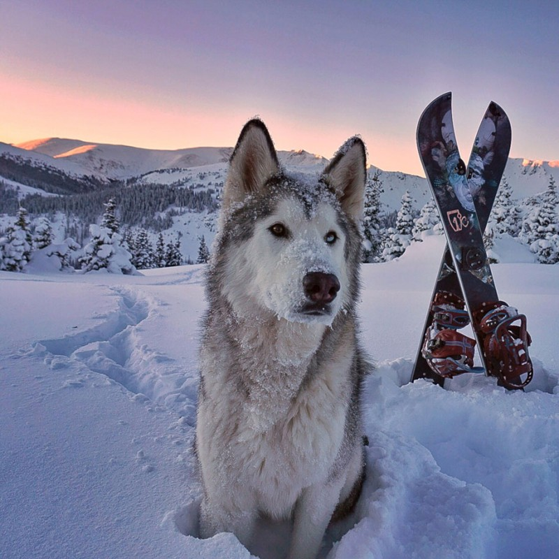 fun-Wolfdog-wild-life-adventures-nature-photography (22)