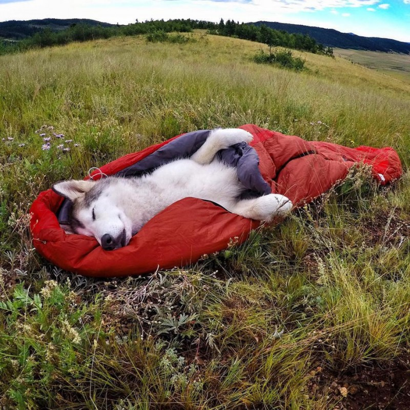 fun-Wolfdog-wild-life-adventures-nature-photography (3)