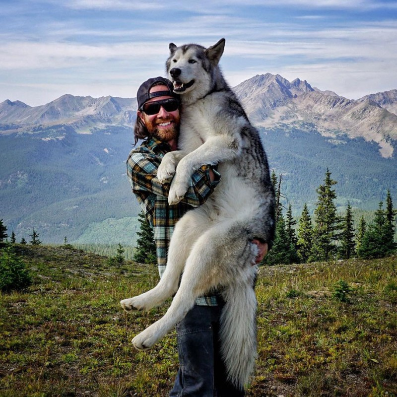 fun-Wolfdog-wild-life-adventures-nature-photography (5)