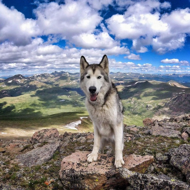 fun-Wolfdog-wild-life-adventures-nature-photography (7)
