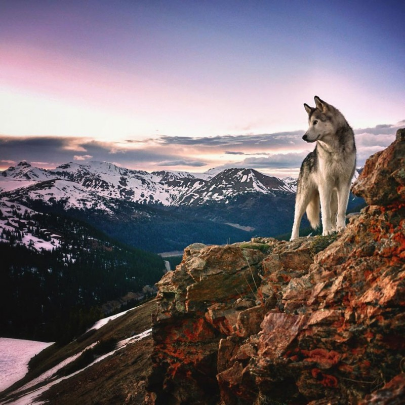 fun-Wolfdog-wild-life-adventures-nature-photography (8)