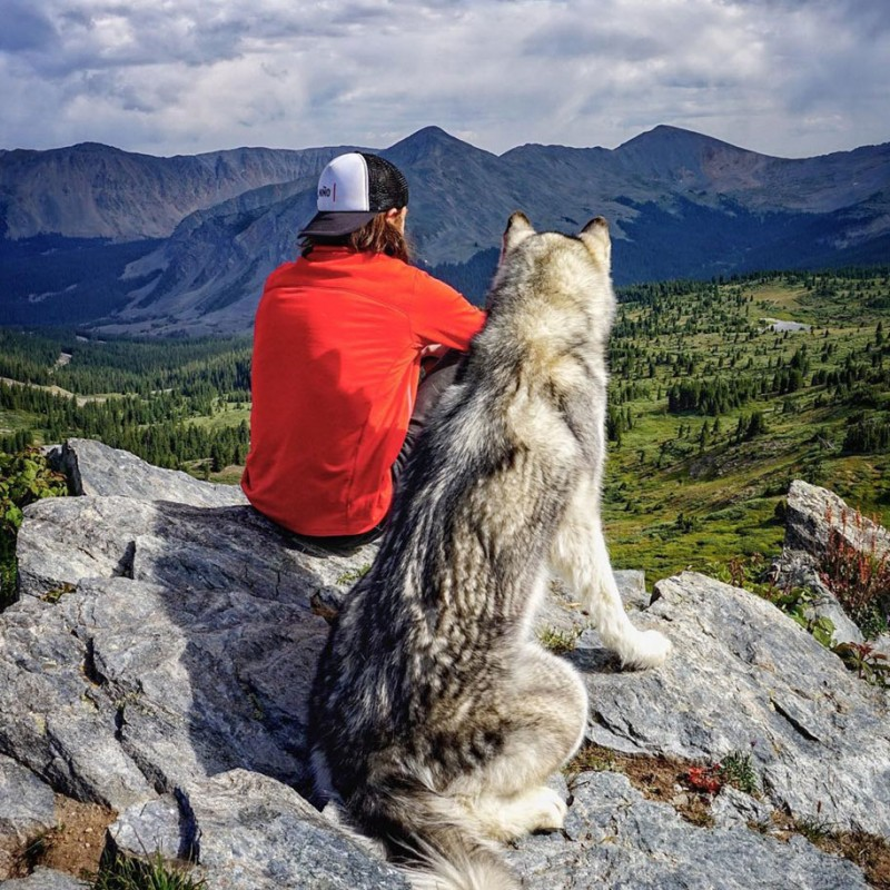 fun-Wolfdog-wild-life-adventures-nature-photography (9)