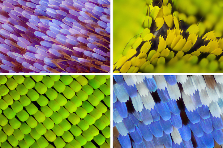 miscroscopic-butterfly-wings-photos-macro-photography (11)