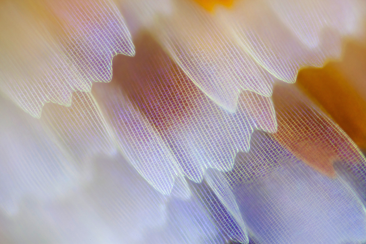 miscroscopic-butterfly-wings-photos-macro-photography (2)