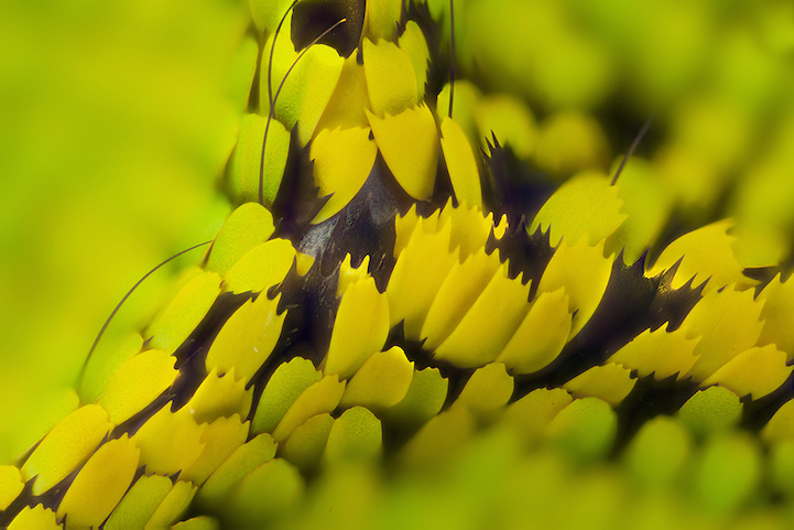 miscroscopic-butterfly-wings-photos-macro-photography (3)