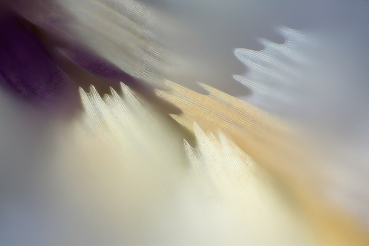 miscroscopic-butterfly-wings-photos-macro-photography (7)