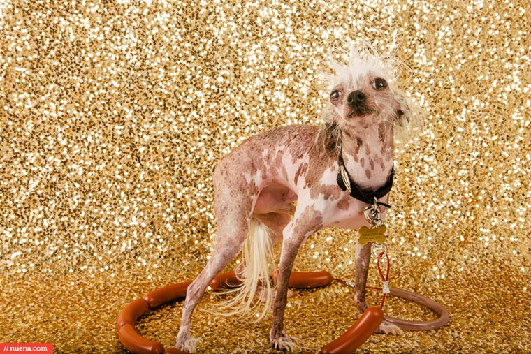winner-of-Worlds-Ugliest-Dog-2015-pictures (11)