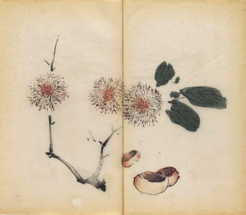world-oldest-Calligraphy-Painting-coloured-book (7)