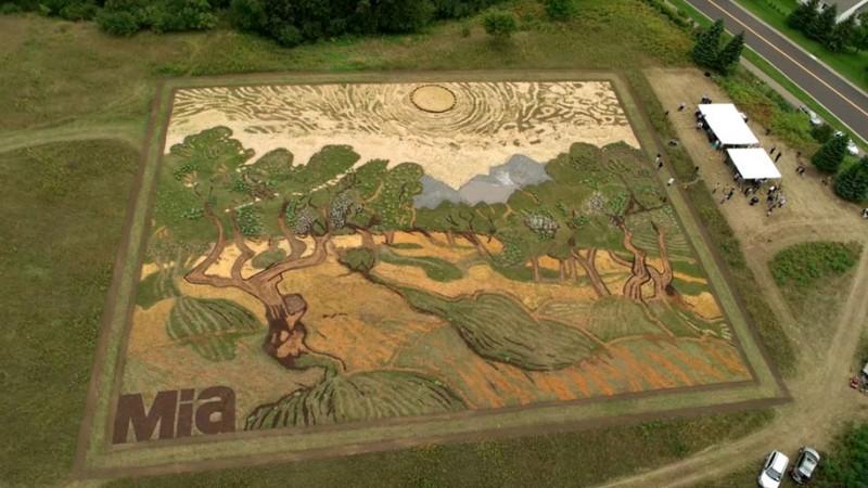 amazing-work-of-art-van-gogh-olive-trees-field-minneapolis (2)