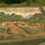 "Artist recreated Van Gogh's 1889 painting ""Olive Trees"" by planting 1.2-Acre field"