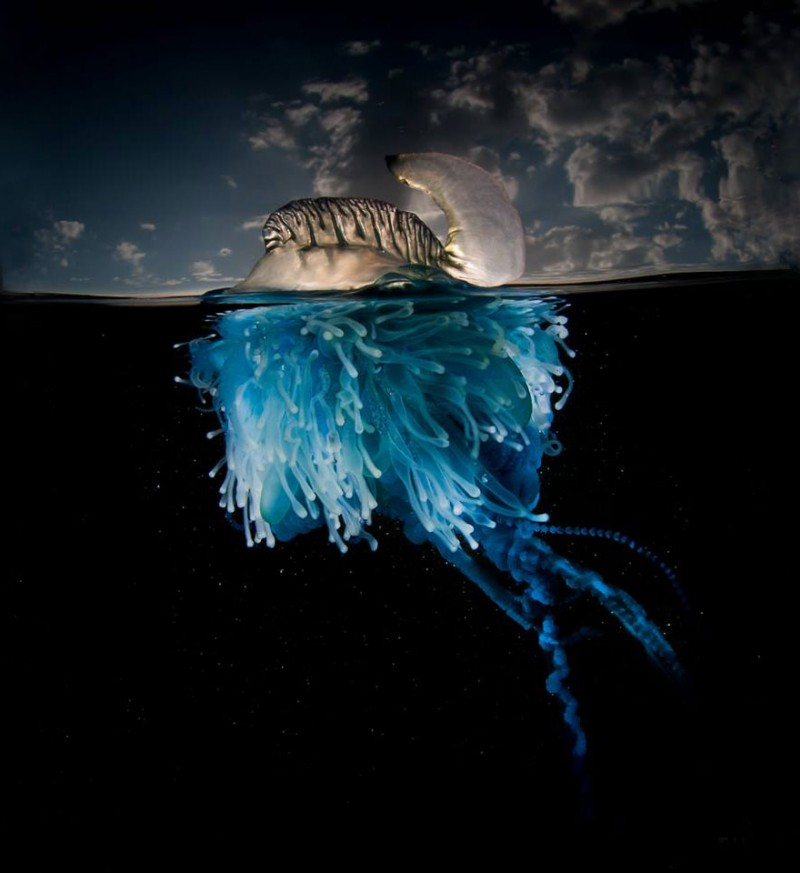 beautiful-wonderful-Half-Underwater-photography (2)