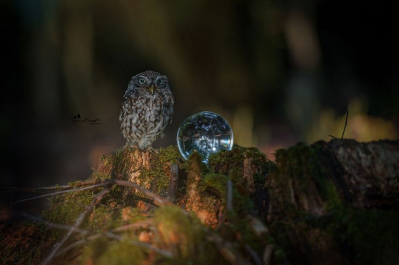 cute-animal-photo-adorable-owl-hide-rain-mushroom (2)