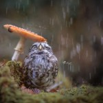 A little owl under a mushroom hiding from rain – Adorable photos of animals by photographer Tanja Brandt