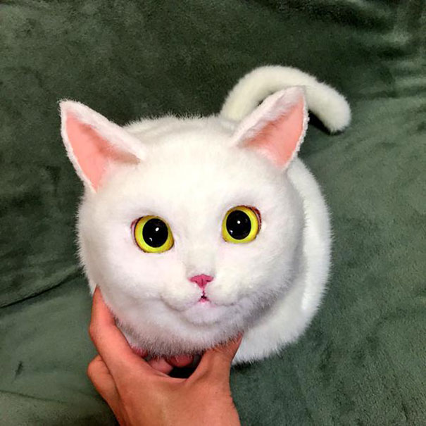 cute-funny-realistic-cat-hand-bags (4)