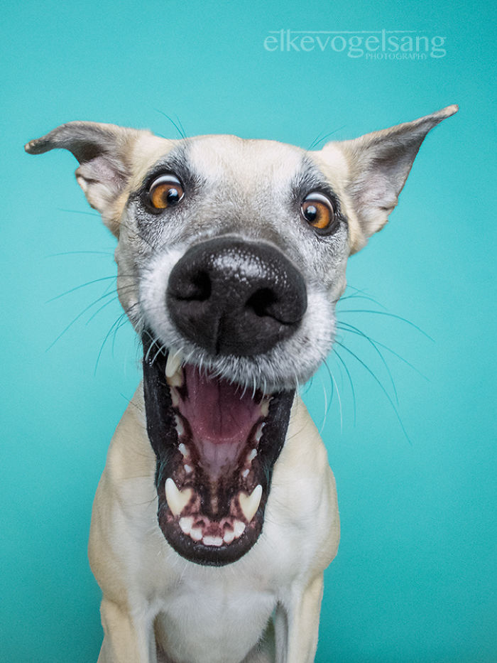funny-adorable-playful-expressive-dog-portraits-photos (14)