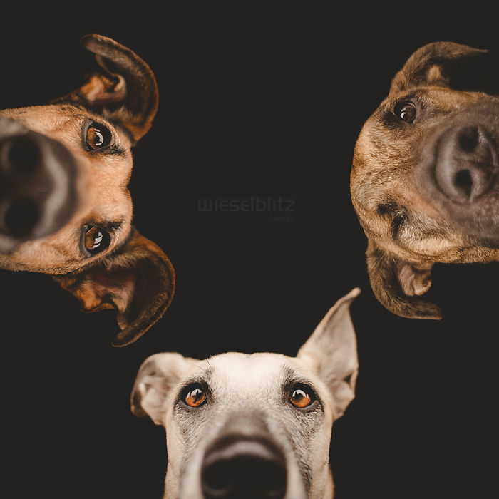 funny-adorable-playful-expressive-dog-portraits-photos (15)