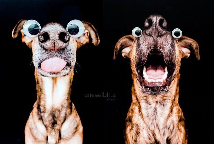 funny-adorable-playful-expressive-dog-portraits-photos (2)