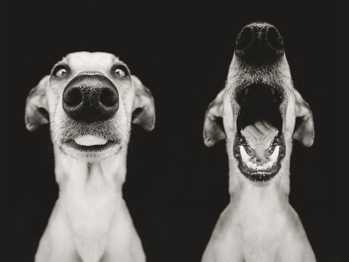 funny-adorable-playful-expressive-dog-portraits-photos (8)