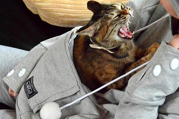 cute-cat-pouch-pocket-hoodie-design (10)