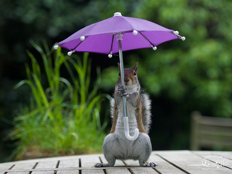 funny-photos-of-cute-squirrel-umbrella-rain (3)