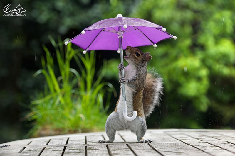 funny-photos-of-cute-squirrel-umbrella-rain (5)