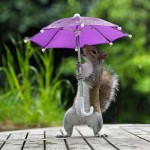 A squirrel with an umbrella seems to take shelter from rain in South West London
