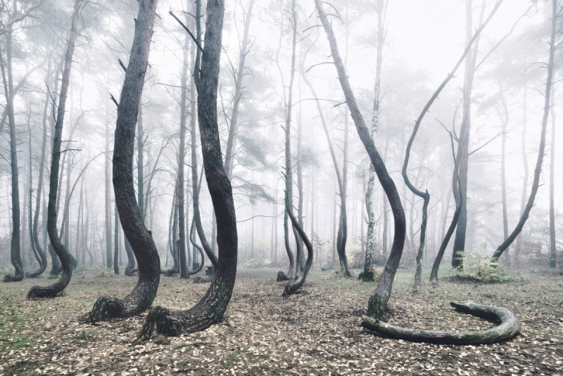 odd-strange-Crooked-Forest-bent-trees-froest-poland (6)