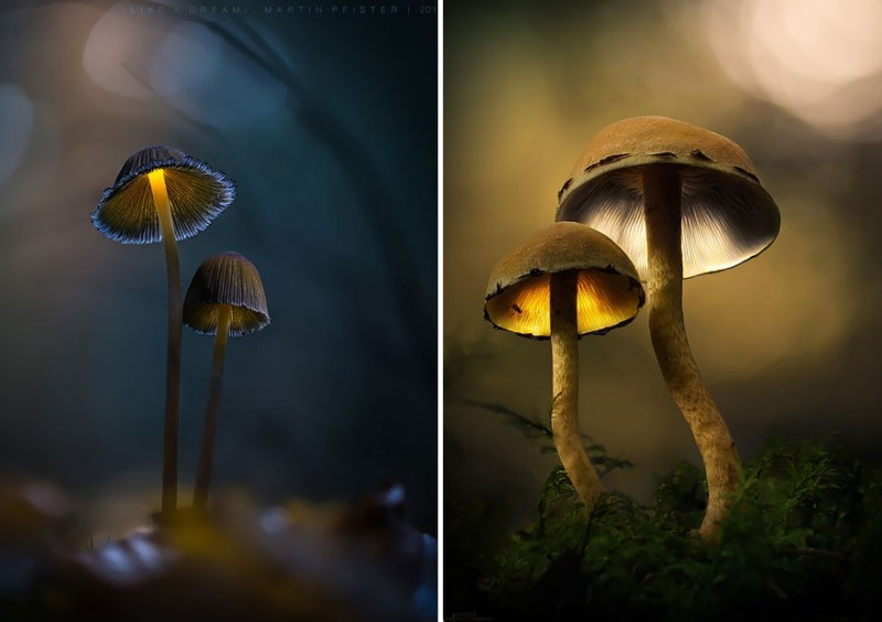 stunning-beautiful-mushrooms-macro-photography (1)