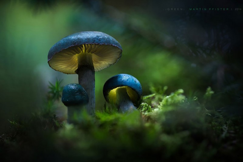 stunning-beautiful-mushrooms-macro-photography (10)