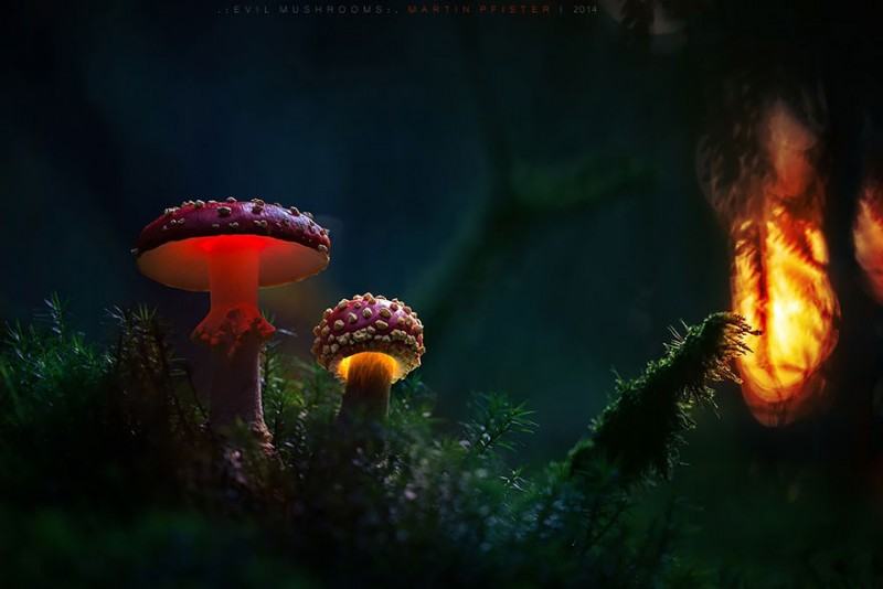 stunning-beautiful-mushrooms-macro-photography (12)