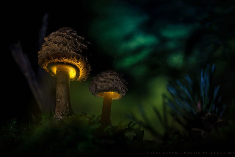 stunning-beautiful-mushrooms-macro-photography (13)