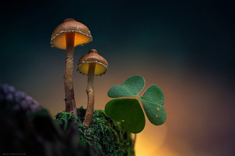 stunning-beautiful-mushrooms-macro-photography (7)