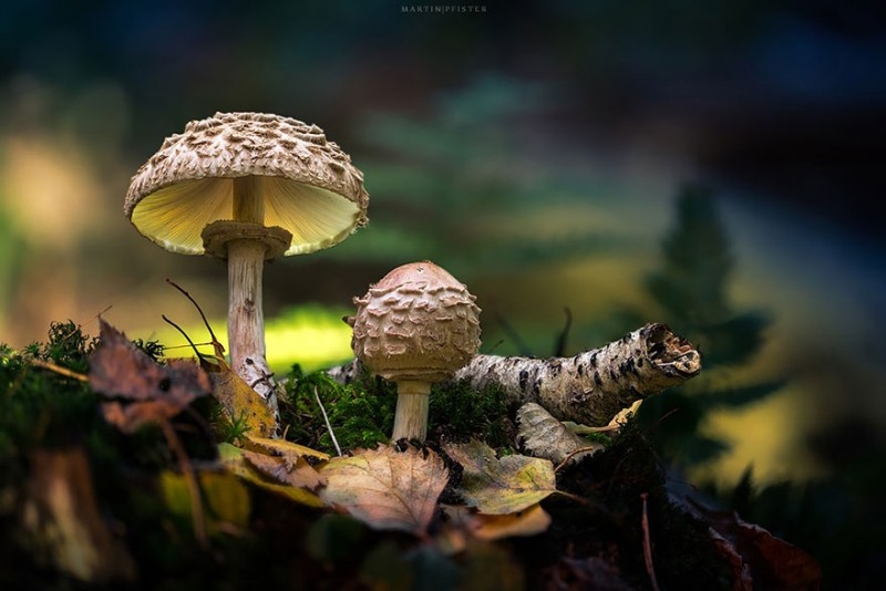 stunning-beautiful-mushrooms-macro-photography (8)