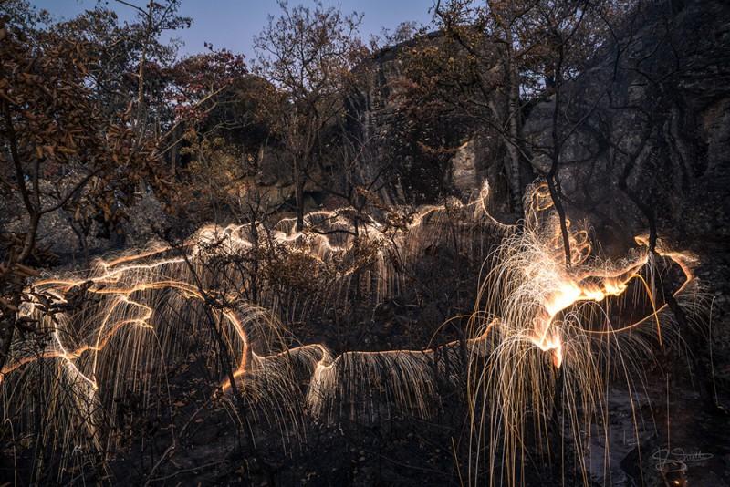 stunning-beautiful-tree-light-graffiti-doodles-long-exposure-technology (3)