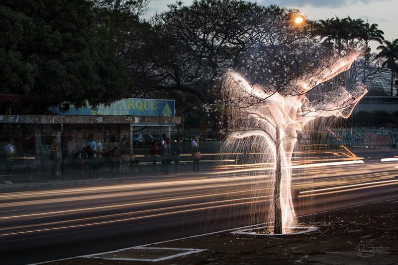stunning-beautiful-tree-light-graffiti-doodles-long-exposure-technology (6)