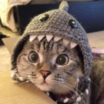 Instagrams-most-famous-cat-Nala-cute-pictures (10)