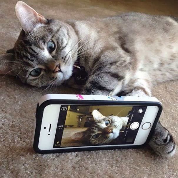 Instagrams-most-famous-cat-Nala-cute-pictures (4)