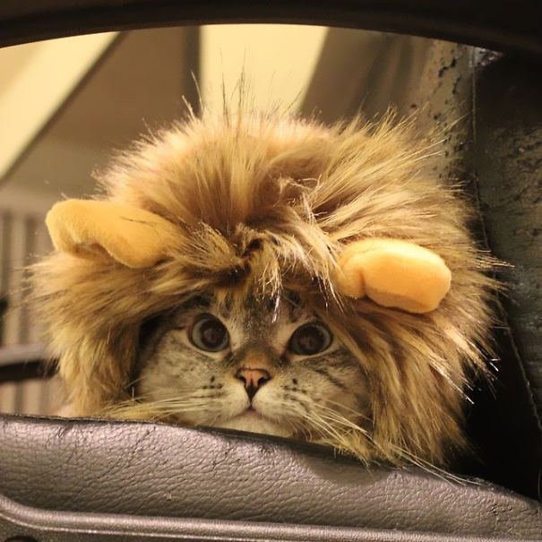 Instagrams-most-famous-cat-Nala-cute-pictures (9)