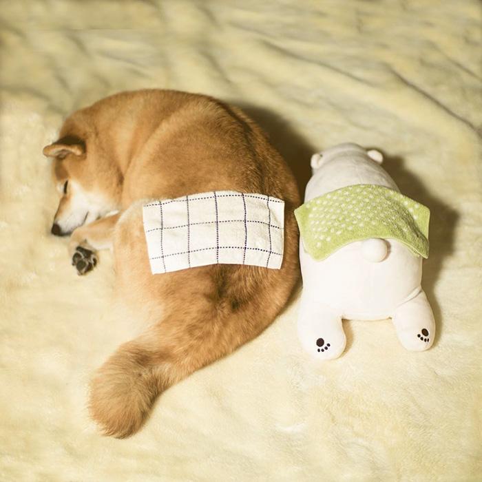 adorable-teddy-bear-look-alike-pup-dog-sleeps-same-position (3)