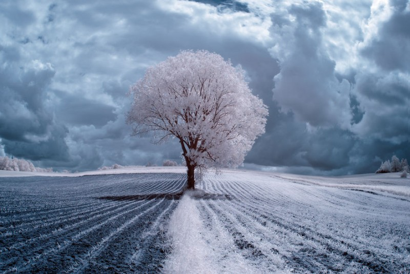 amazing-beauty-trees-landscape-infrared-photography (1)