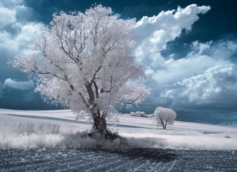 amazing-beauty-trees-landscape-infrared-photography (11)