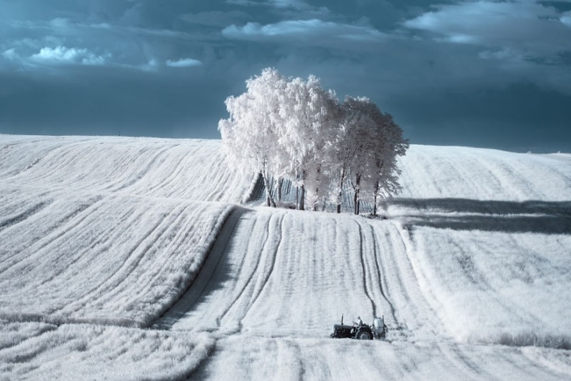 amazing-beauty-trees-landscape-infrared-photography (2)