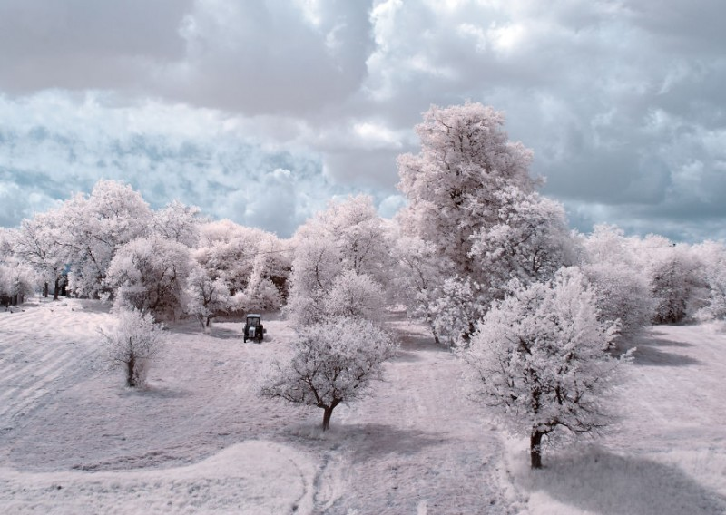 amazing-beauty-trees-landscape-infrared-photography (3)