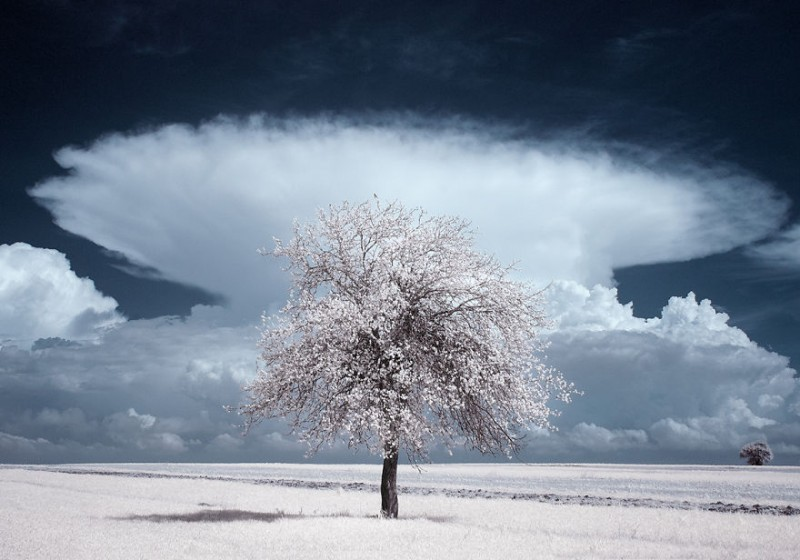 amazing-beauty-trees-landscape-infrared-photography (4)
