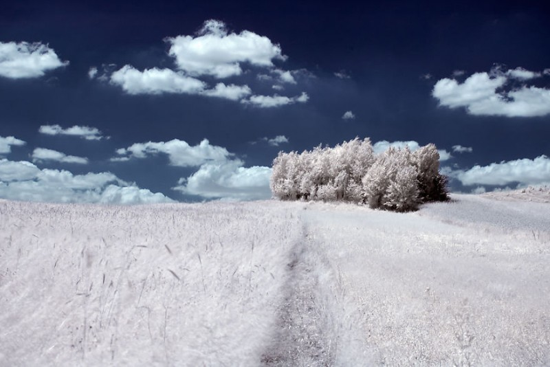 amazing-beauty-trees-landscape-infrared-photography (6)