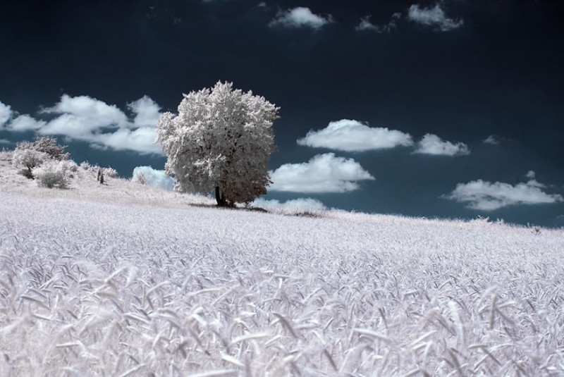 amazing-beauty-trees-landscape-infrared-photography (8)
