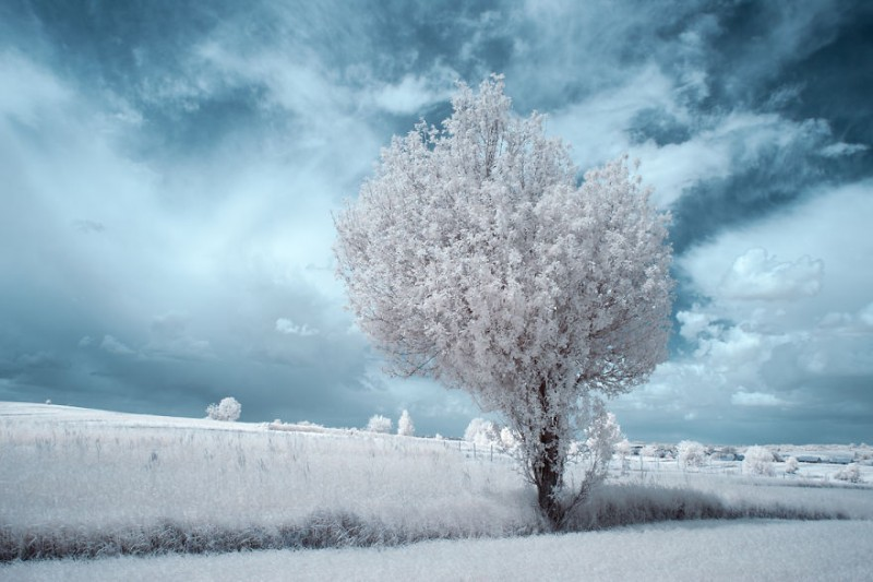 amazing-beauty-trees-landscape-infrared-photography (9)